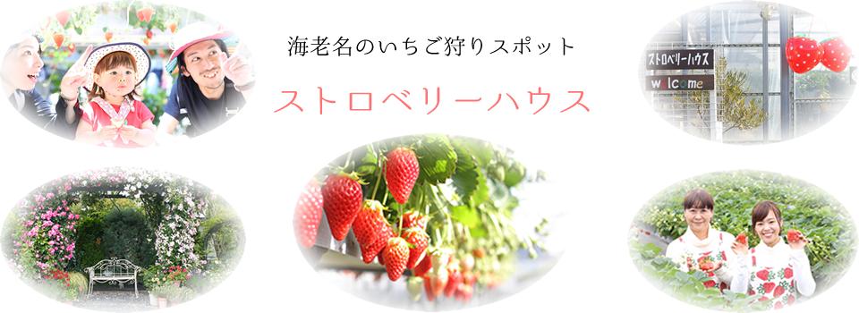 神奈川県海老名市のいちご狩りスポット・ストロベリーハウス